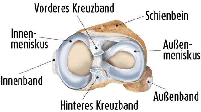 Anatomie Meniskus in Draufsicht
